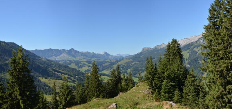 Panorama Vorder-Rrüchiwald 1420m, Juli 2013